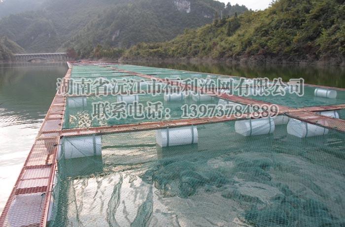 网箱养鱼平台设计建设